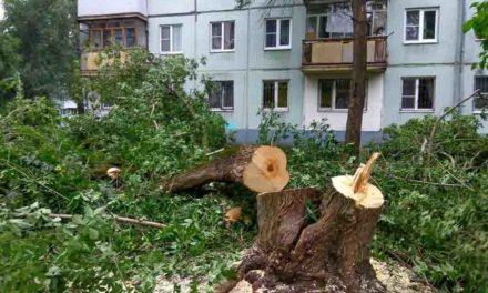 Ст. 260 УК РФ — Незаконная рубка… деревьев, кустарников